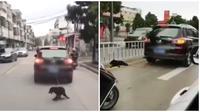 Seekor anjing diikat ke mobil oleh pemiliknya (Sumber: worldofbuzz)