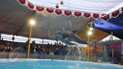 Atraksi lumba-lumba saat pertunjukan sirkus keliling di Kota Depok, Jawa Barat, Minggu (31/5/2015). Pertunjukan tersebut digelar hingga 14 Juni mendatang, dengan tarif antara Rp35ribu-Rp50ribu. (Liputan6.com/Herman Zakharia)