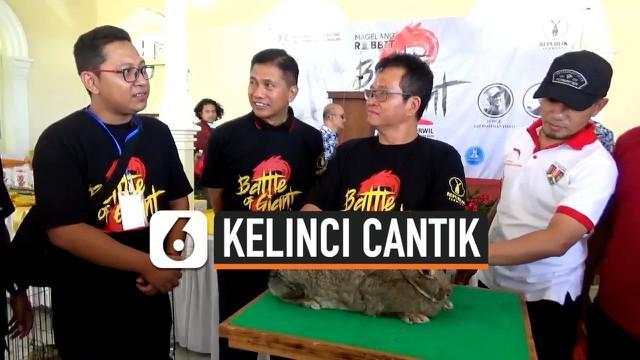 Ratusan kelinci unggulan berbagai jenis dari berbagai daerah di Pulau Jawa. Meriahkan Magelang Rabbit Festival 2019 di Kompleks Wilayah 2 Magelang, Rabu (13/11/2019).