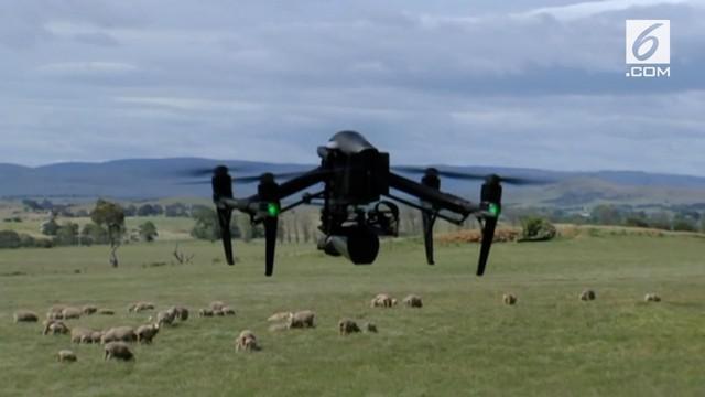 Tasmanian Institute of Agriculture membuat drone yang dilengkapi kamera infra merah. Teknologi ini bertujuan untuk memantau domba dari langit.