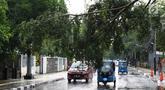 Pengendara menghindari pohon tumbang yang menutupi sebagian jalan di kawasan Cikini, Jakarta, Kamis (22/11). Hujan deras disertai angin kencang  melanda Ibukota pada Kamis (22/11) sore. (Liputan6.com/Immanuel Antonius)