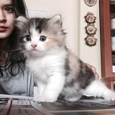 Raisa Dan 4 Artis Yang Jatuh Cinta Dengan Kucing News Entertainment Fimela Com