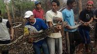 Penemuan ular di Jambi