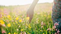 Australia Barat merupakan tempat bagi wildflower terbesar di dunia. Tersebar dibeberapa lokasi, setidaknya ada 12 ribu jenis bunga liar, dengan sekitar 60 persen tidak ditemukan di tempat lain.