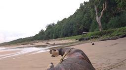 Foto yang dirilis 26 April 2018 memperlihatkan badak bercula satu yang ditemukan mati di Pantai Karang Panjang, Taman Nasional Ujung Kulon. Setelah dilakukan identifikasi, badak jantan tersebut diprediksi mati tiga hari sebelum ditemukan. (AFP Photo)