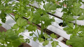 8 Macam Hidroponik yang Sering Digunakan, Cocok untuk Berkebun di Rumah
