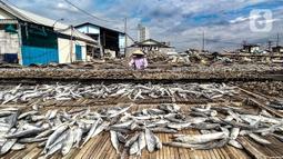 Aktivitas nelayan saat menjemur ikan asin di Muara Angke, Jakarta, Minggu (8/11/2020). Saat ini, nelayan terpaksa menurunkan harga jual ikan asin menjadi Rp 25 ribu per kilogram. (merdeka.com/Iqbal Septian Nugroho)