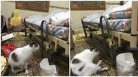 Kucing bernama Messi yang setia tunggui jenazah majikannya (Sumber: Instagram/nuriyliamalek)