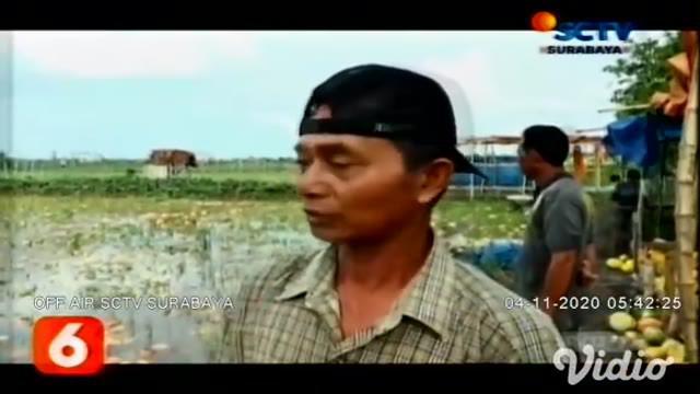 Curah hujan tinggi beberapa hari terakhir di Jawa Timur, membuat lahan pertanian tanaman melon dan semangka terendam banjir di Lamongan. Kondisi yang sama juga terjadi di Pacitan, akibat lahan pertanian terendam banjir.