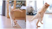 Potret Saat Kucing Beratraksi Ini Bikin Cengar-Cengir (sumber:Facebook/Kementrian Humor Indonesia)