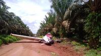 Kecelakaan pesawat di Ketapang (dok Humas Polda Kalbar)