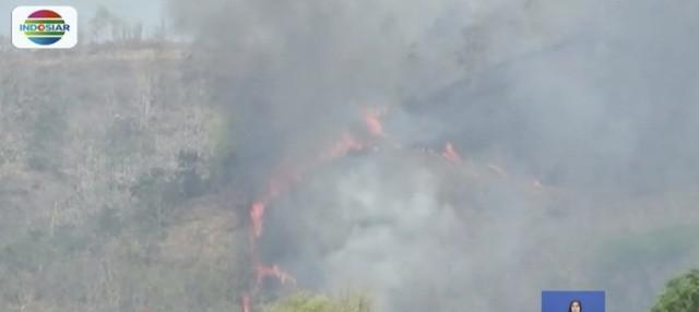 Tujuh hektar lahan hutan Gunung Kebo, Trenggalek, terbakar. Petugas belum mengetahui penyebab kebakaran.