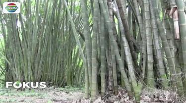 Wisata alam hutan bambu di Pagaralam, Sumatera Selatan, menyimpan pesona karena memunyai bambu dan tumbuhan lain yang langka.