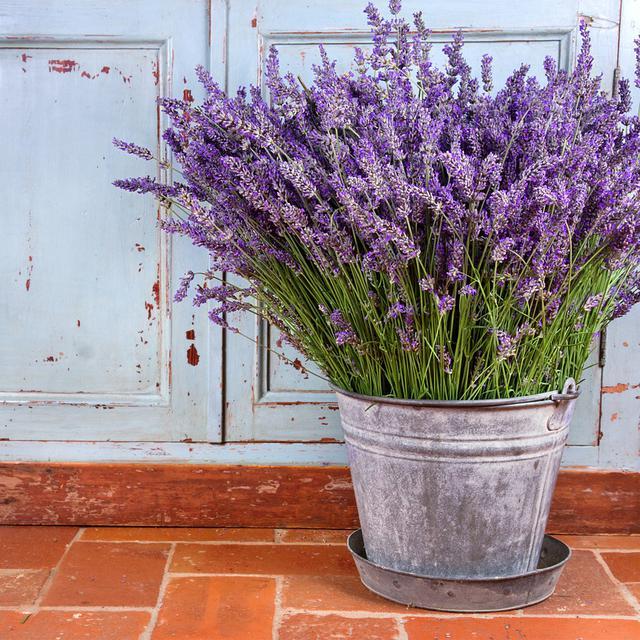 Cara Menanam Bunga Lavender Di Pot Mudah Dipraktikkan Hot Liputan6 Com
