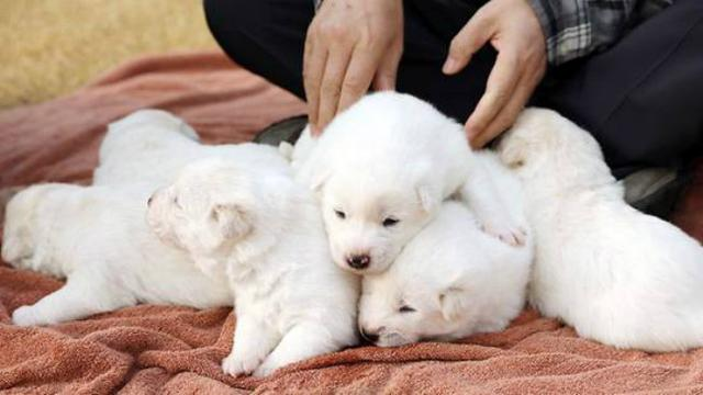 Download 4800 Gambar Anak Anjing Lucu Dan Imut Terbaru