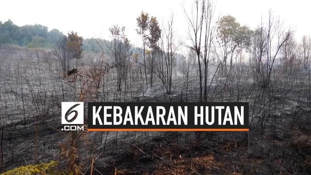 Kebakaran hutan di Kalimantan Timur hingga kini masih terjadi. Kebakaran bahkan menghanguskan habitat asli tanaman anggrek hitam.