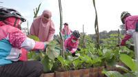 Ibu-ibu warga Bumi Sawangan Indah 2, Depok tengah bergantian merawat sayur di lahan tani mereka bersama. (Foto: Liputan6.com).