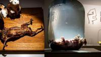 Terdapat museum di Swiss yang menyajikan pajangan makanan-makanan aneh yang membuat jijik banyak pengunjungnya.