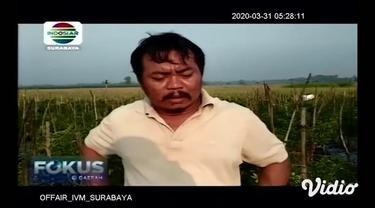Petani cabai merah besar di Desa Medowo, Kabupaten Mojokerto merugi puluhan juta akibat harga yang anjlok dari Rp. 20000 menjadi Rp 6000 / kg sehingga tidak mencukupi untuk menutupi biaya tanam dan perawatan. Kondisi petani juga terpuruk karena seran...