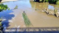 Arung sungai ala penjual bambu (Liputan6.com / Arfandi Ibrahim)