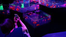 Seorang wanita mengambil gambar ikan mas saat pratinjau pers dari pameran EDO Nihonbashi Art Aquarium 2018 di Tokyo, Jepang (5/7). Pameran tahunan di Tokyo ini akan dibuka untuk umum mulai 6 Juli hingga 24 September 2018. (AFP Photo/Martin Bureau)