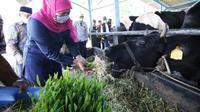 Kunjungan Khofifah ke produksi susu di Pasuruan