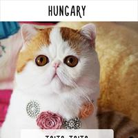 Sebutan untuk kucing di berbagai negara