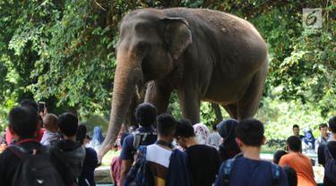 Pengunjung melihat Gajah Sumatera di kawasan Kebun Binatang Ragunan, Jakarta, Selasa (26/12). Libur cuti bersama perayaan Natal 2017 dimanfaatkan warga untuk berekreasi di Kebun Binatang Ragunan Jakarta. (Liputan6.com/Helmi Fithriansyah)