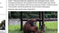 Seekor orangutan memungut dan mengisap rokok yang dibuang sengaja oleh seorang pengunjung kebun binatang. (Screenshot: Facebook/Marison Guciano)