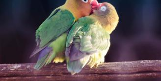 42 Koleksi Gambar Hewan Burung Lucu HD