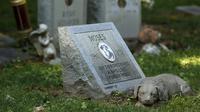 """Sebuah nisan anjing untuk """"Moses"""" terlihat di Memorial Park in Aspen Hill, Maryland, 25 Agustus 2015. Didirikan sejak tahun 1921, lebih dari 50.000 hewan dimakamkan di tempat ini. (REUTERS/Gary Cameron)"""