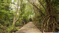 Pemulihan Gambut dan Mangrove,  Pemerintah Perkuat Kebijakan Iklim