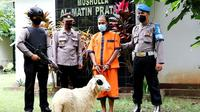 Petani di Kebumen nekat mencuri kambing lantaran keranjingan judi togel. (Foto: Liputan6.com/Polres Kebumen)