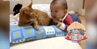 Reaksi Kucing Saat Ekornya Digigit Bayi