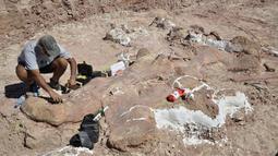 Berdasarkan temuan tulang paha yang besar itu, mereka meyakini dinosaurus itu memiliki panjang 40 meter dan tinggi 20 meter. Dengan berat 77 ton atau setara berat 14 gajah Afrika, Sabtu (17/5/2014) (AFP PHOTO / Museo Egidio Feruglio).