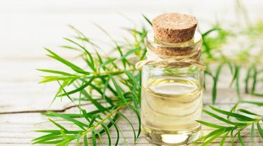 ilustrasi tea tree essential oil/freepik