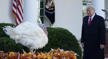 FOTO: Donald Trump Ampuni Seekor Kalkun dalam Tradisi Thanksgiving