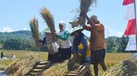 Petani panen padi saat kunjungan Menteri Pertanian, Amran Sulaiman di Wanareja, Cilacap, 2017 lalu. (Foto: Liputan6.com/Muhamad Ridlo)