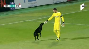 Seekor anjing meramaikan pertandingan liga bola nasional di Gori, Georgia.