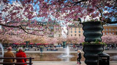 Tak Hanya Jepang, Potret Keindahan Bunga Sakura di 6 Negara Dunia Ini Bikin Takjub