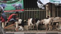 Pedagang saat berjualan hewan kurban di trotoar, Jakarta, Senin (5/8/2019). Meski Pemprov DKI Jakarta telah melarang, sejumlah pedagang nekat berjualan hewan kurban di trotoar dengan alasan tidak memiliki lahan. (merdeka.com/Iqbal S. Nugroho)