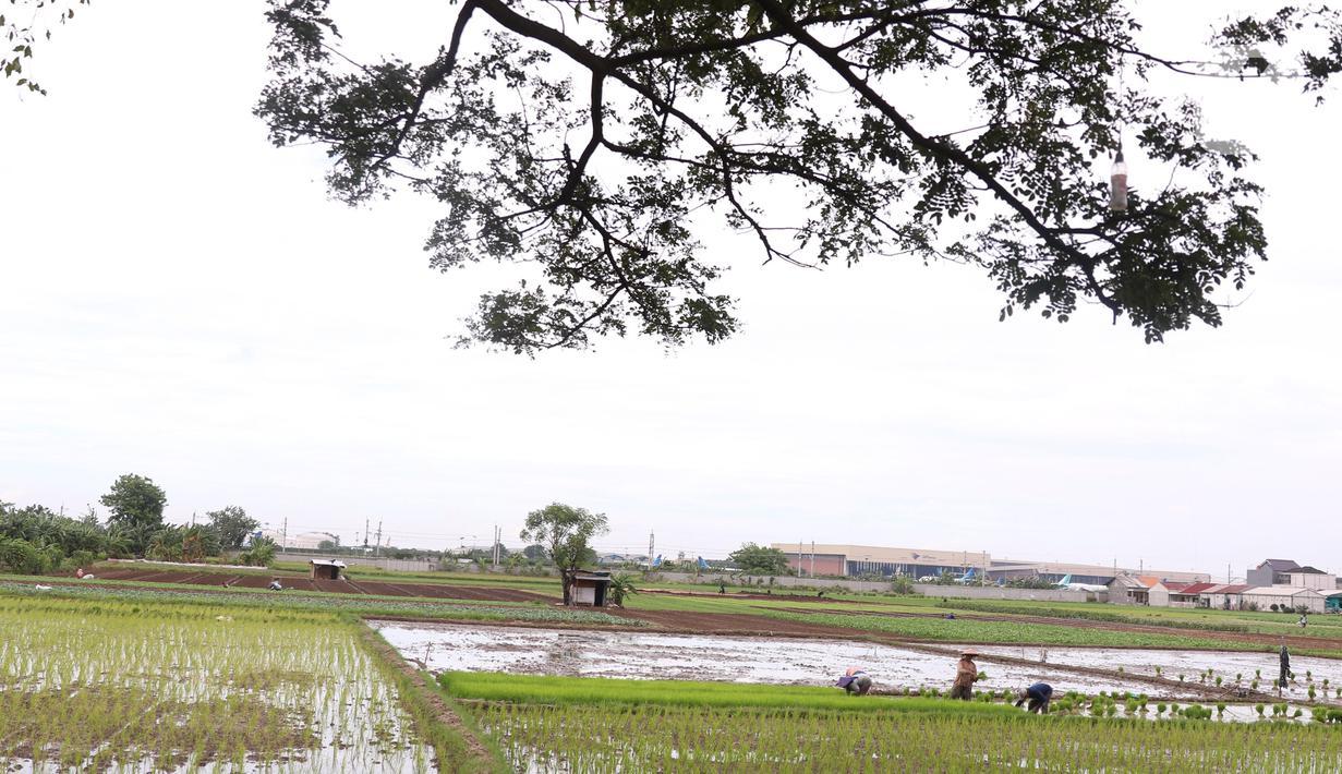 Petani menanam padi di persawahan di kawasan Tangerang, Kamis (3/12/2020). Kementerian Pertanian menargetkan pada musim tanam pertama 2020-2021 penanaman padi mencapai seluas 8,2 juta hektare menghasilkan 20 juta ton beras. (Liputan6.com/Angga Yuniar)