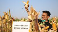 Menteri Pertanian Syahrul Yasin Limpo melakukan kunjungan kerja di Kabupaten Kendal, Jawa Tengah, Sabtu (27/06/2020).