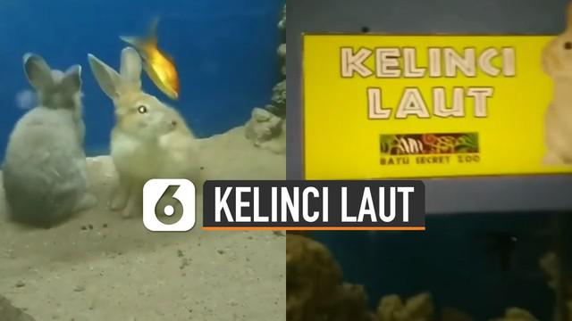Seorang pemuda dibuat kaget ketika menemukan kelinci laut di akuarium.