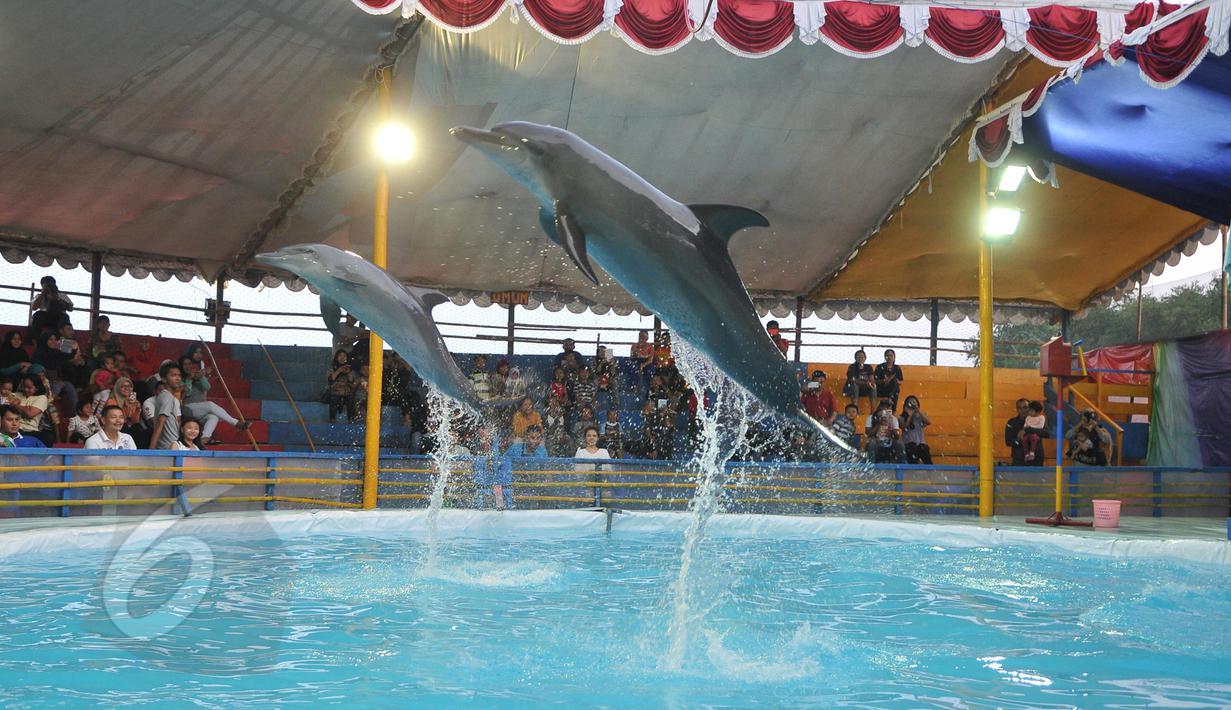 Dua ekor lumba-lumba melompat di atas air saat pertunjukan sirkus keliling di Kota Depok, Jawa Barat, Minggu (31/5/2015). Pertunjukan tersebut digelar hingga 14 Juni mendatang, dengan tarif antara Rp35ribu-Rp50ribu. (Liputan6.com/Herman Zakharia)