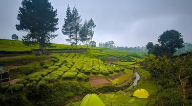 Tempat Kemping di Tengah Kebun Teh Pangalengan Bandung, Ramai Pengunjung Walau Belum Rampung