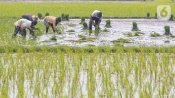 Petani menanam bibit padi di Tangerang Selatan, Jumat (15/10/2020). Lahan pertanian yang terbatas bisa menjadi sektor strategis baru bagi masyarakat Tangsel dalam menghadapi situasi pandemi Covid-19. (Liputan6.com/Fery Pradolo)