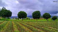 Agrowisata Modoinding di Manado. foto: Instagram @titikeken