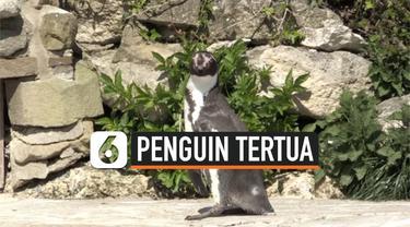vertical penguin