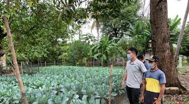 Melalui bantuan Taiwan Technical Mission (TTM), para petani berhasil menanam tanaman hortikultura berkualitas tinggi seperti sayuran tomat kecil, okra dan jambu biji (TETO)